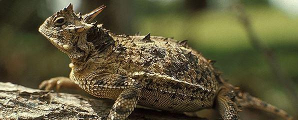 Texas Wildlife Exemption