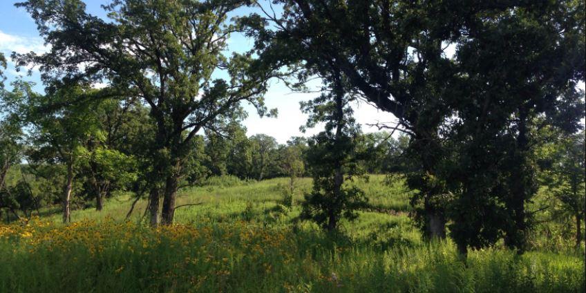 Wildlife Appraisal Use in Fayette County