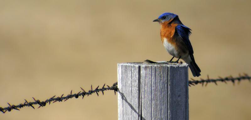 Maintaining a Wildlife Tax Valuation in Washington County, Texas