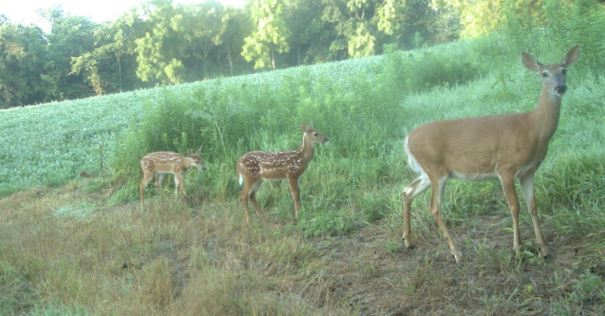 Wildlife Exemption: Supplemental Feeding in Texas - Wildlife